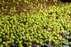 Primer de aceitunas en una máquina del aceite de oliva Fotografía de archivo libre de regalías