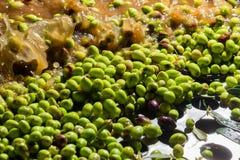 Primer de aceitunas en una máquina del aceite de oliva Foto de archivo