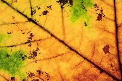 Primer de Autumn Leaf Fotos de archivo
