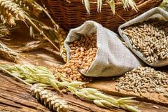 Primer de bolsos con los granos de cereal Fotografía de archivo libre de regalías
