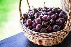 Primer de cerezas en una cesta cesta con las cerezas escogidas Imágenes de archivo libres de regalías