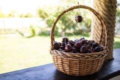 Primer de cerezas en una cesta cesta con las cerezas escogidas Imagenes de archivo
