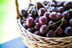 Primer de cerezas en una cesta cesta con las cerezas escogidas Fotografía de archivo libre de regalías