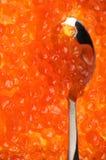 Primer de color salmón del caviar Imagenes de archivo