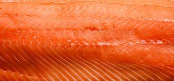 Primer de color salmón fresco del prendedero foto de archivo