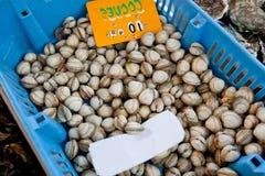 Primer de crustáceos en envase en la tienda Foto de archivo
