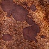 Primer de cuero de la textura Fotografía de archivo