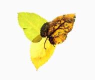 Primer de diverso Autumn Leaves Fotografía de archivo libre de regalías
