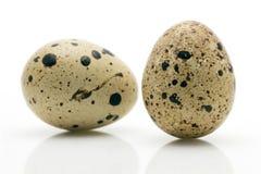 Primer de dos huevos de codornices Fotografía de archivo libre de regalías