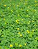 Primer de flores amarillas imágenes de archivo libres de regalías