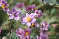 Primer de flores púrpuras y amarillas en jardín botánico Fotos de archivo