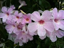 Primer de flores rosadas con follaje verde Foto de archivo