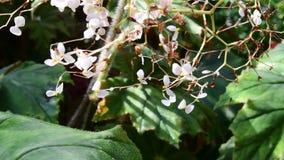 Primer de flores tropicales Fondo tropical hermoso Fondo rojo y verde Fondo tropical Blanco minúsculo almacen de metraje de vídeo