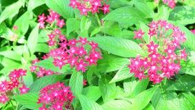 Primer de flores tropicales Fondo tropical hermoso Fondo rojo y verde Fondo tropical Rojo minúsculo almacen de video