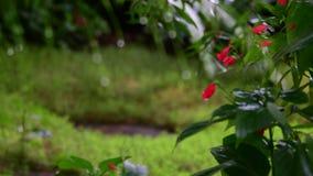 Primer de flores tropicales Fondo tropical hermoso Fondo rojo y verde Fondo tropical y las monedas 4K metrajes