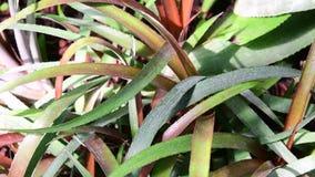 Primer de flores tropicales Fondo tropical hermoso Fondo rosado y verde Fondo tropical Color de rosa minúsculo almacen de video