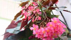 Primer de flores tropicales Fondo tropical hermoso Fondo rosado y verde Fondo tropical Color de rosa minúsculo almacen de metraje de vídeo