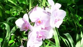 Primer de flores tropicales Fondo tropical hermoso Fondo rosado y verde Fondo tropical 4K metrajes