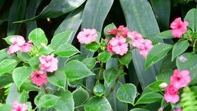 Primer de flores tropicales Fondo tropical hermoso Fondo rosado y verde 4K almacen de video