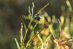Primer de Forest Vegetation con la hierba, los arándanos y el follaje - Sunny Summer Day imagen de archivo
