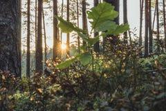 Primer de Forest Vegetation con la hierba y el follaje - Sunny Summer Day imagen de archivo