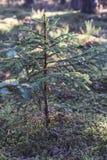 Primer de Forest Vegetation con la hierba y el follaje - Sunny Summer Day foto de archivo libre de regalías