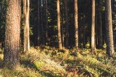 Primer de Forest Vegetation con la hierba y el follaje - Sunny Summer Day fotografía de archivo libre de regalías