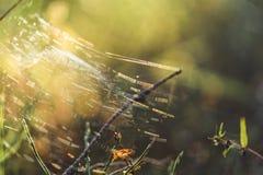 Primer de Forest Vegetation con la hierba y el follaje - Sunny Summer Day, gráfico borroso, fondo abstracto imagenes de archivo