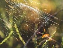 Primer de Forest Vegetation con la hierba y el follaje - Sunny Summer Day, gráfico borroso, fondo abstracto fotos de archivo