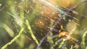 Primer de Forest Vegetation con la hierba y el follaje - Sunny Summer Day, gráfico borroso, fondo abstracto fotografía de archivo