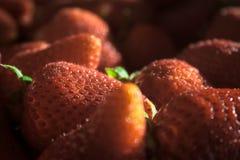 Primer de fresas con la iluminación dramática Imagen de archivo