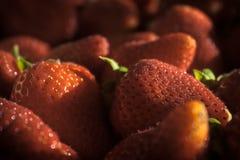 Primer de fresas con la iluminación dramática Fotos de archivo libres de regalías