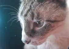 Primer de Fuzzy Face Imagen de archivo