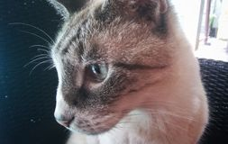 Primer 2 de Fuzzy Face Imagen de archivo