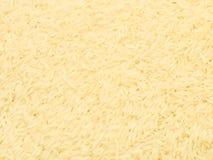 Primer de granos del arroz del jazmín de Tailandia Imágenes de archivo libres de regalías