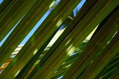 Primer de hoja de palma verde hermoso Fondo brillante fotografía de archivo