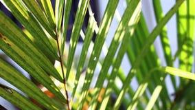 Primer de hojas de palma en el parque de isla tropical de Bali, Indonesia metrajes
