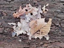 Primer de hojas en un pedazo de corteza de árbol foto de archivo libre de regalías