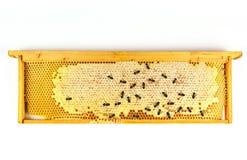Primer de Honey Honeycomb Panal con el fondo de las abejas Foto de archivo