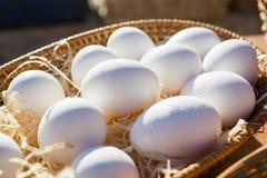 Primer de huevos en cesta de mimbre Foto de archivo