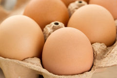 Primer de huevos marrones Imagen de archivo libre de regalías