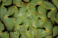 Primer de la alcachofa Imagen de archivo libre de regalías