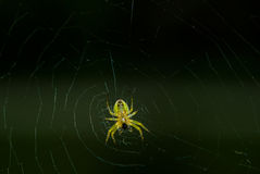 Primer de la araña Imágenes de archivo libres de regalías