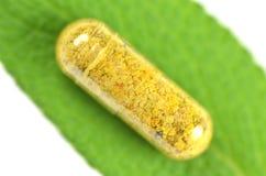 Primer de la cápsula del polen en la hoja sabia Fotos de archivo