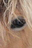 Primer de la cara del caballo Foto de archivo libre de regalías