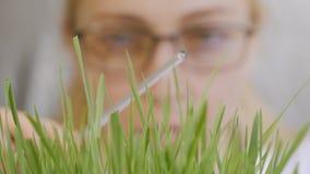 Primer de la cara de una mujer con los vidrios, considerando los troncos crecientes de una planta verde metrajes