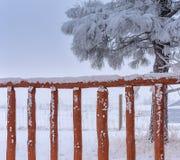 Primer de la cerca de madera vieja cubierta con la nieve, árbol de pino en el fondo Foto de archivo libre de regalías