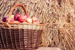 Primer de la cesta con las manzanas Imagenes de archivo