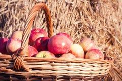 Primer de la cesta con las manzanas Fotografía de archivo