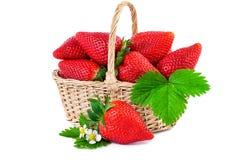 Primer de la cesta de la fresa Fresas frescas aisladas en el fondo blanco Foto de archivo